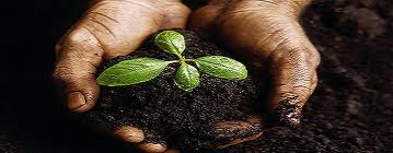 Like a tiny plant God waters and feeds us so that we grow in Christian spiritual maturity